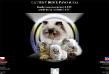 Deste Paws perský colorpoint / himalayan cats